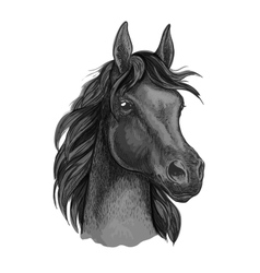 Black horse portrait with shiny dark eyes vector
