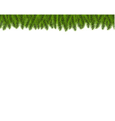 fir tree border isolated white background vector image
