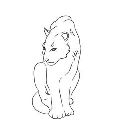 panther sits drawn by lines vector image
