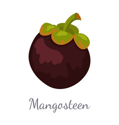 Purple mangosteen exotic juicy fruit icon vector