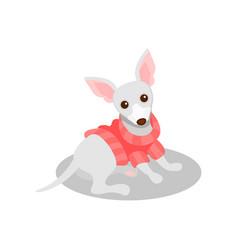 White chihuahua pedigree dog cute puppy pet vector
