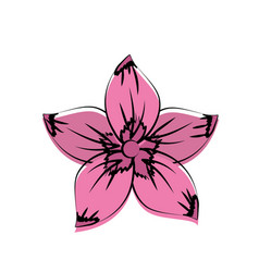 rustic flower with natural petals vector image vector image