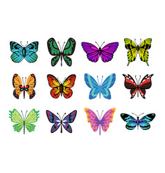 collection color butterfly hand drawn moth vector image