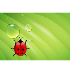 ladybug on wet leaf vector image