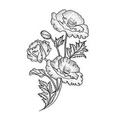 Poppy flower sketch engraving vector