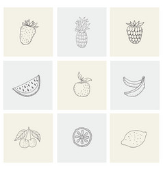 set with healthy food fruit berries for print vector image