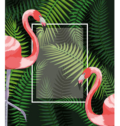 square frame with flamingos and branches leaves vector image