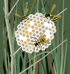 Wasp nest in grass vector