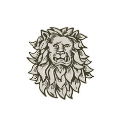 Angry Lion Big Cat Head Etching vector image