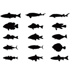 Silhouette of sea and river fish vector image vector image