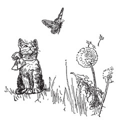 Cat watching butterfly vintage vector