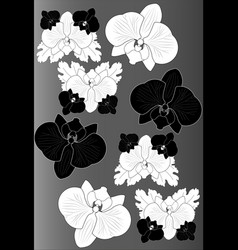 Black and white orchids on gray background vector