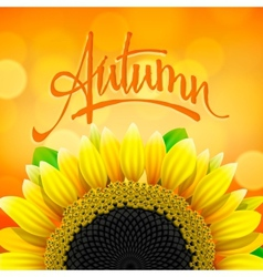 Floral autumn background with sunflower vector image