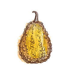 ink sketch of gourd vector image