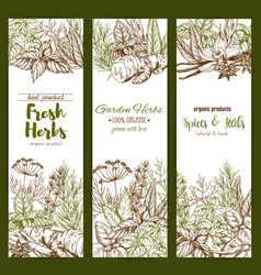 Spices and herbs farm store sketch banners vector