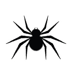 Spider in black vector