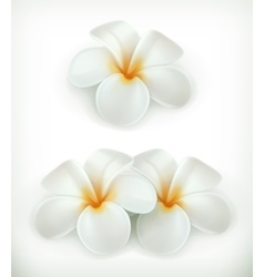 White flowers icons vector image