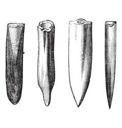 Belemnite fossils vintage engraving vector