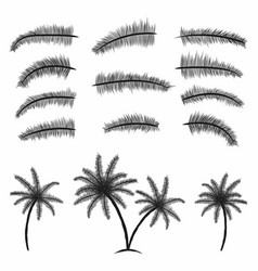 palm leaves collection tropical palm trees with vector image