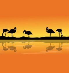 at riverbank with silhouette flamingo scenery vector image vector image