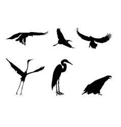 eagle and the stork vector image