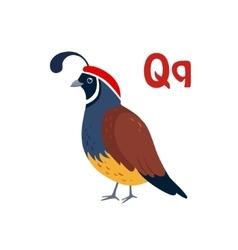 Quail Funny Alphabet Animal vector image vector image