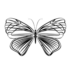 sketch butterfly vector image