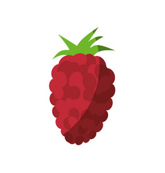 Blackberry fruit icon vector