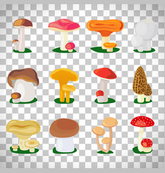 Edible mushrooms on transparent background vector