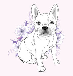 French bulldog sitting in front of white vector