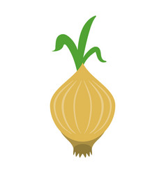 garlic food flat vector image