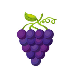 Grapes fresh fruit icon vector
