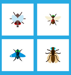 Icon flat buzz set of bluebottle dung fly and vector