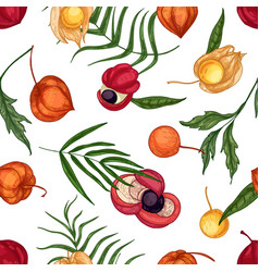 natural seamless pattern with fresh ripe guarana vector image