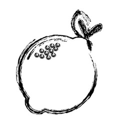 Contour taste lemon vegetable icon vector