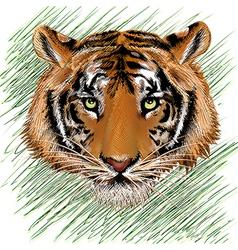 The tiger sketch vector image