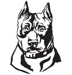 decorative portrait dog american staffordshire vector image