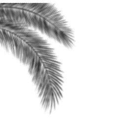 palm leaves black halftone silhouettes hanging vector image
