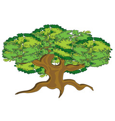 Big and curly tree summer vector