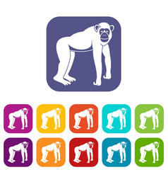 Chimpanzee icons set flat vector