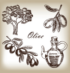 Hand drawn olive set vector