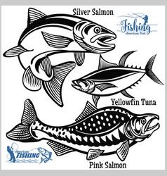 Pink salmon silver salmon and yellowfin tuna vector