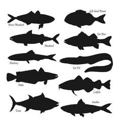 Sea and ocean fish black silhouettes vector