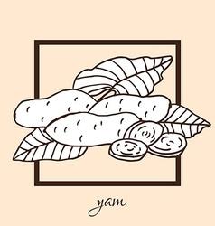 Hand drawn yam vector