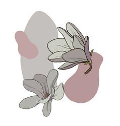 magnoli flowers vector image