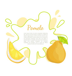Pomelo exotic fruit tropical food poster vector