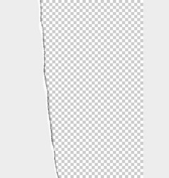 torn from top to bottom vertical sheet vector image