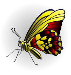 Butterfly on the with background vector