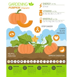 Gardening work farming infographic Pumpkin Graphic vector