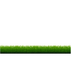Green grass border isolated white background vector